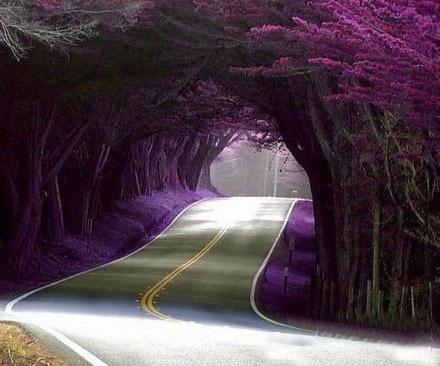 紫色,因为喜欢,所以爱